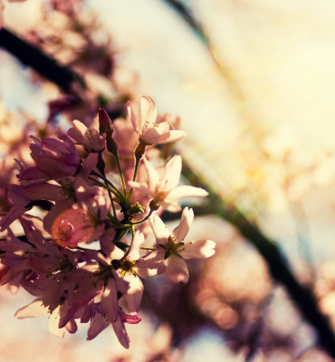 Floral 17 - 2016