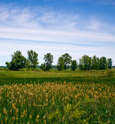 Wetland Landscape - 2016
