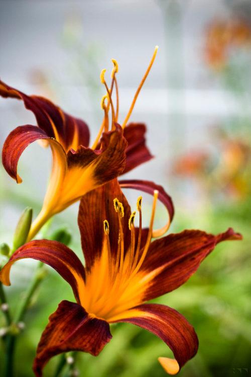 Floral 27 - 2016