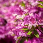 Floral 41 - 2018