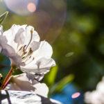 Floral 42 - 2018