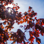 Light Through Leaves 2 - 2018